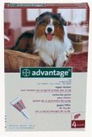 Advantage Hond 250 bestrijding vlo 10-25 kilo